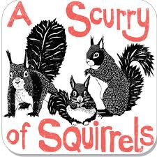Celtic Diary Saturday June 30: A Scurry Of Squirrels