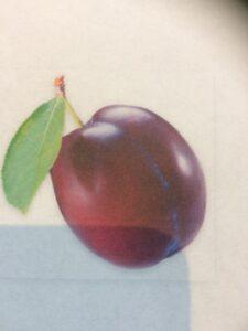 plum1.jpg